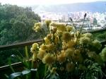 Caracas desde la terraza
